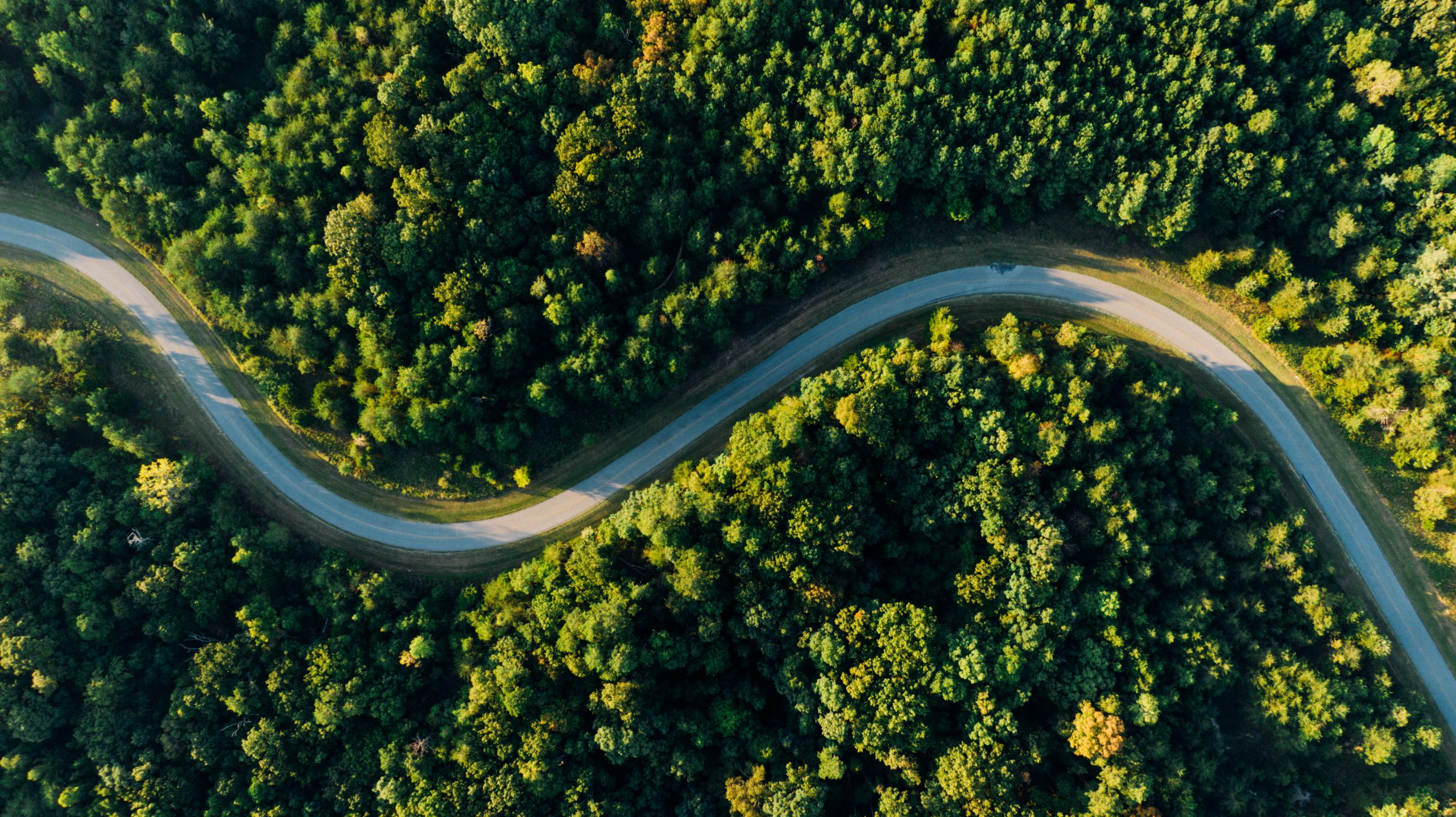 A birds eye view of an empty road through a forest to represent green fleets.
